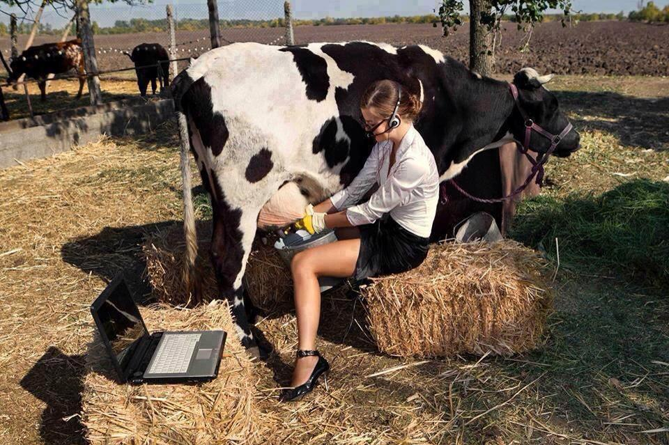 Stalla moderne, subventionet në bujqesi