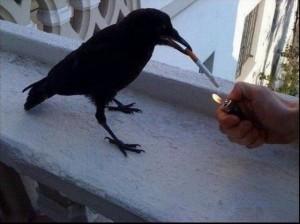 Po e provoj edhe une nje cigare