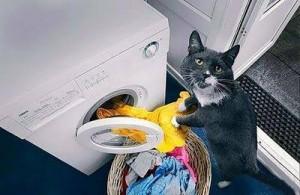 Sa mace e zgjuar kjo...