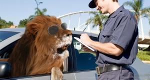Mangup police !