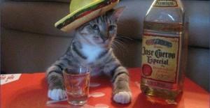 Macja pijanece