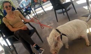 Super shëtitje me një derrkuc në Tiranë