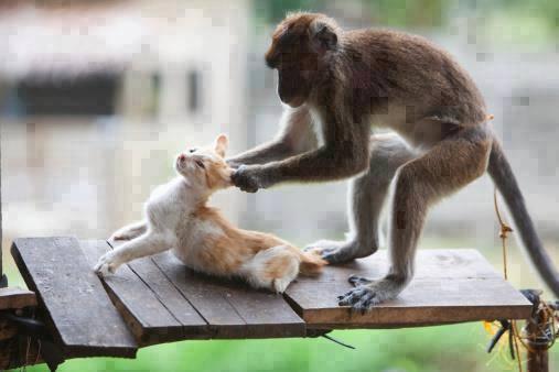 Kujt i thu majmun ti ?